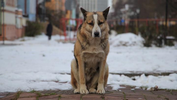 Скончался бездомный пес, который жил на Чумбаровке и стал местной достопримечательностью
