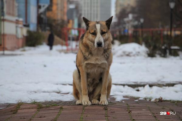 Пса на Чумбаровке подкармливали горожане