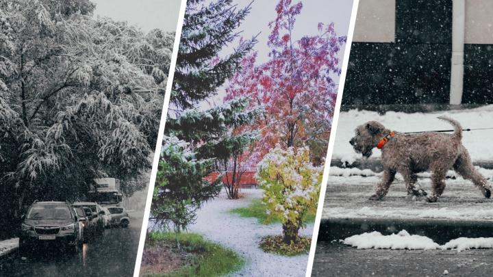 Снежный, осенний, твой: подборка ярких кадров уходящего дня
