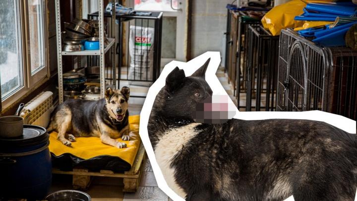 Бедный Гуня. Благодаря необычному псу волонтеры смогли построить больницу для несчастных собак