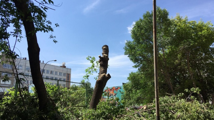 В центре Новосибирска внезапно начали сносить деревья в зелёном дворе