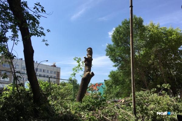 В центре Новосибирска на улице Державина начали сносить деревья