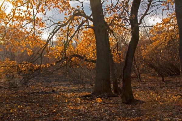 Месяц назад в этих лесах бушевали пожары