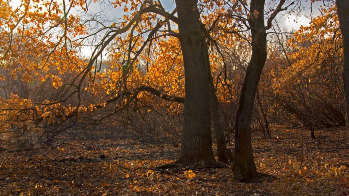 «Зима отменяется?»: фотограф показала удивительный лес, выживший после сильных пожаров