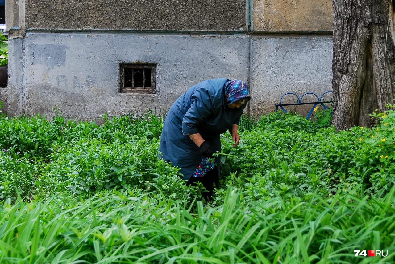Самая буйная зелень Челябинска — в придомовых палисадниках, где у каждого растения есть хозяин и отношение потому хозяйственное. Городское же хозяйство, по большому счёту, бесхозно