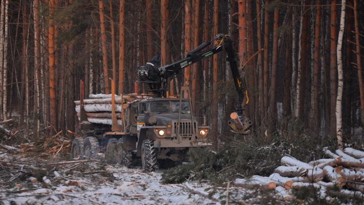 В Свердловской области дровосек уронил дерево на своего напарника. Мужчина погиб на месте