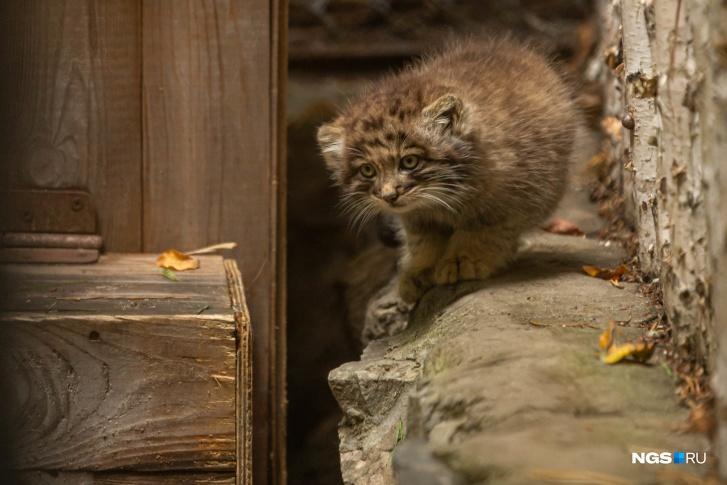 За малышами уже можно наблюдать в Новосибирском зоопарке