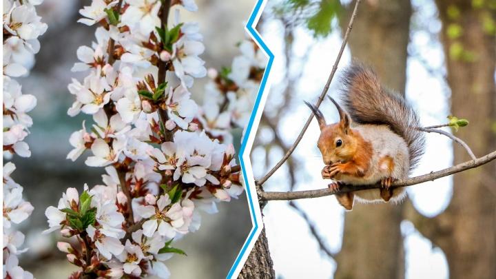 Змеи, белки-фотомодели и цветы: любуемся нижегородской весной, которую мы проводим в самоизоляции