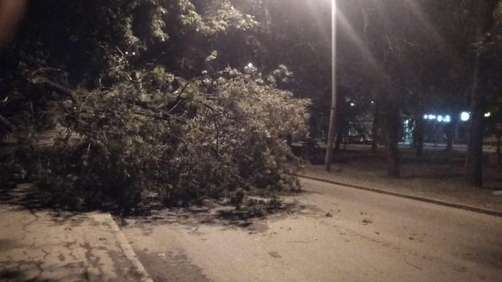 «До сих пор никто не приехал убрать»: на Уралмаше упавшее дерево перегородило дорогу