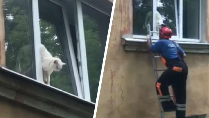 «Кричал от боли»: в Ярославле спасли застрявшего в окне кота