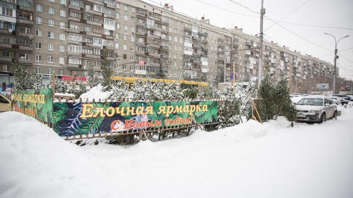 Мэрия объявила дату начала работы елочных базаров в Новосибирске