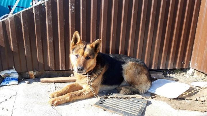 В Башкирии избитую собаку вытащили из реки, есть видео