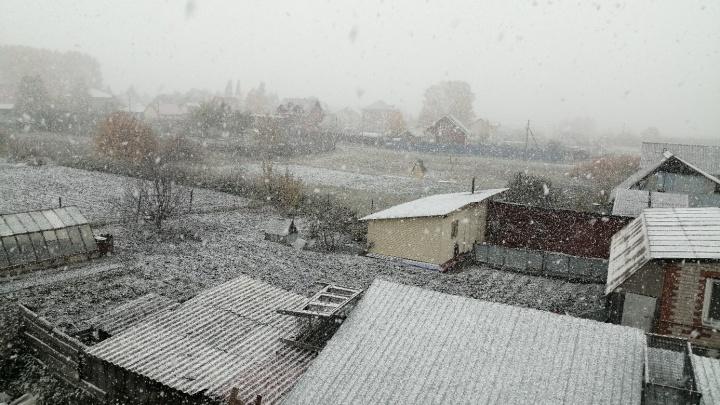 Первый снег в Тюменской области: семь кадров, от которых становится морозно
