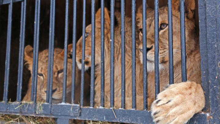 Премьер-министр ответил на критику идеи о строительстве зоопарка в Уфе