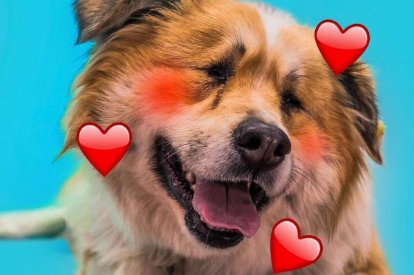Слепой пёс Проша тоже мечтает о любящем хозяине