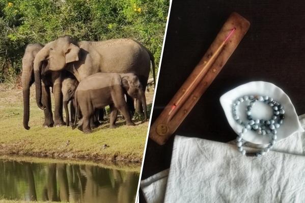 Выручка от украшений из семян-бусин пойдет на защиту слонов