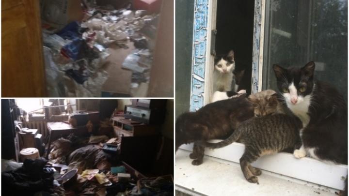 В тюменской многоэтажке соседи нашли брошенную квартиру с десятком кошек. В том числе и мертвых