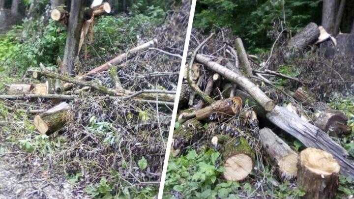 Пермячка пожаловалась на срубленные деревья в долине реки Данилихи. Их не убирают больше года