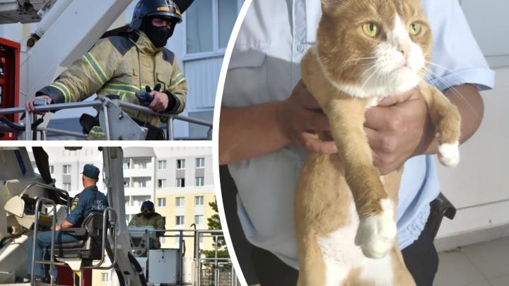 Орал на балконе без еды и воды: тюменские спасатели вызволили кота, запертого в пустой квартире
