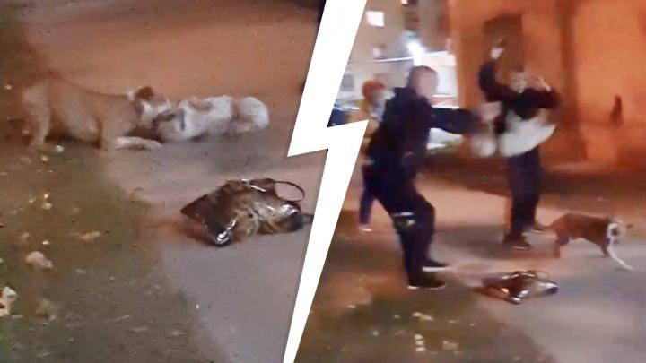 Собак запинывали ногами, пытаясь разнять: жуткое видео из Краснотурьинска