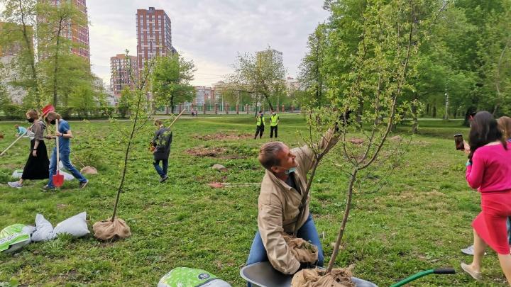 В парке УрГУПС активисты высадили деревья взамен вырубленных под строительство бассейна