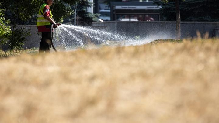 Пожелтела не значит погибла? Смотрим, как трава на газонах в Челябинске превратилась в сухостой