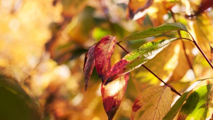 Прогноз погоды на выходные: постепенное погружение в осень