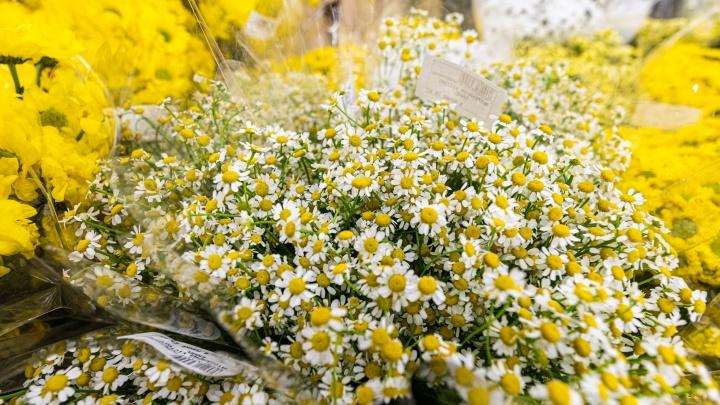 Когда устали от тюльпанов. Что продают к 8 Марта и сколько это стоит — 14 роскошных и странных цветов