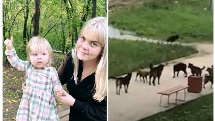 «Их было около двадцати»: в Екатеринбурге на маму с коляской напала стая собак