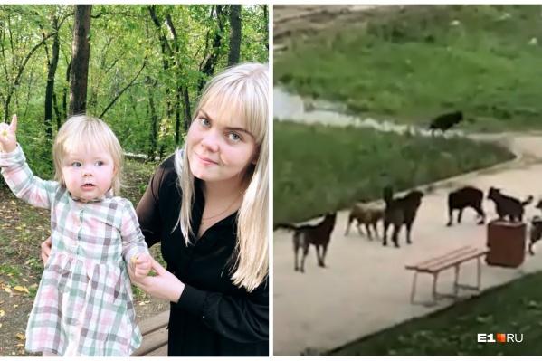 Девушка уверена, что собак подкармливает местный житель