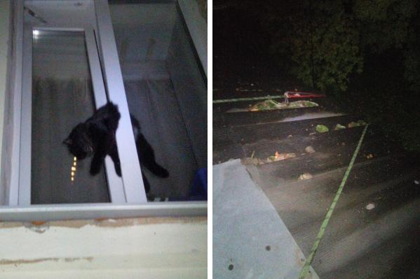 Котик застрял на втором этаже, пришлось лезть с крыши
