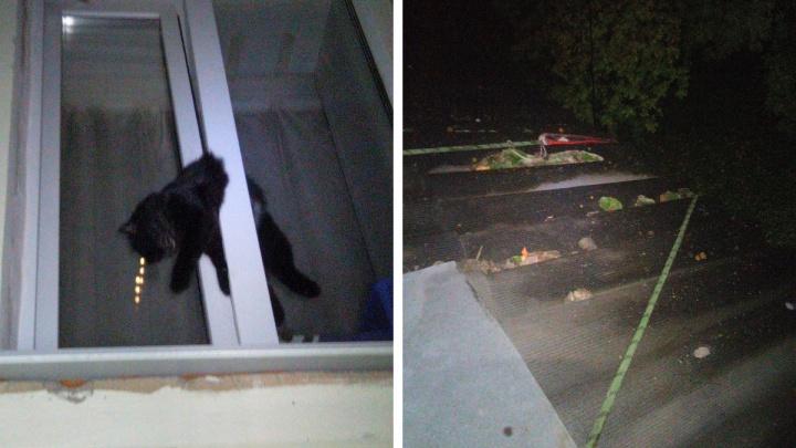 «Застрял исключительно плотно»: в Екатеринбурге вытащили котика, попавшего в оконную ловушку
