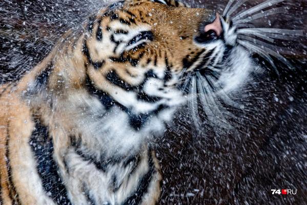 Даже любители жары наслаждаются прохладным душем в челябинские +38 градусов