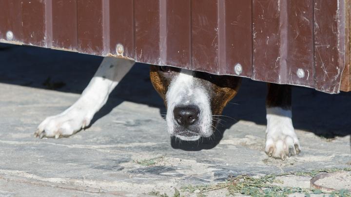 В Волгоградской области бездомная собака укусила за голову пятилетнего малыша
