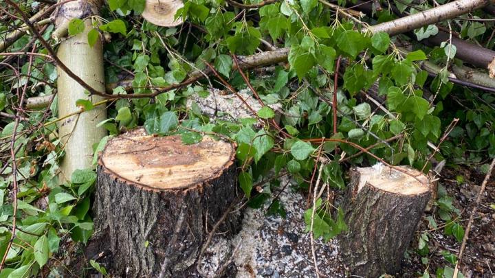 Вырубка деревьев на Северо-Западе Челябинска переросла в уголовное дело