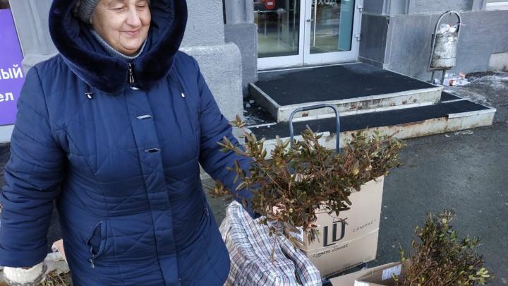 Уличные торговцы начали продавать багульник в Новосибирске