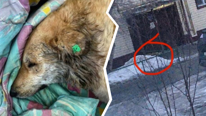 Жители Тюменского района пожаловались на соседку, которая травит уличных собак. Ее за это накажут?