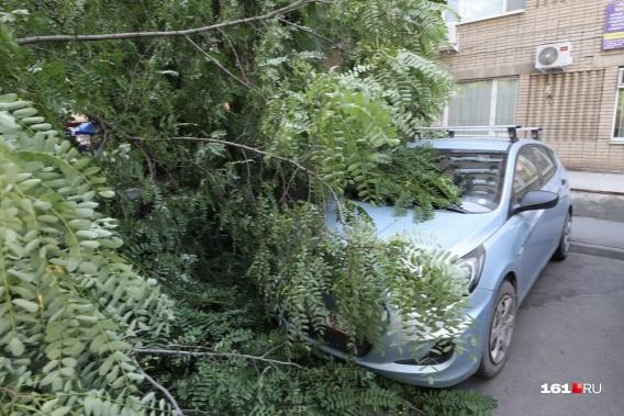 В такую погоду лучше не оставлять автомобили под деревьями