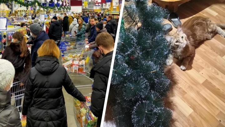Что творится ночью в центре: Новый год в Ярославле в режиме онлайн