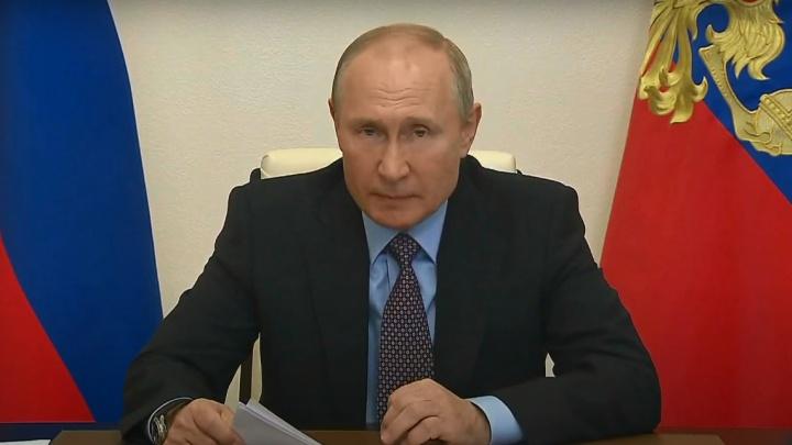 «Местные власти не могут»: Владимиру Путину рассказали про тысячи бездомных псов Волгограда