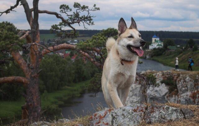 «Сидеть в вольере для них равносильно тюрьме»: уральцам устроят встречу с собаками, которые ищут дом