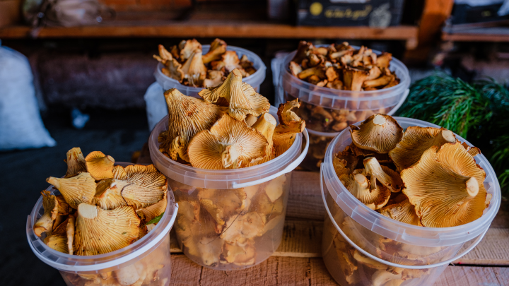 На рынке и у бабушек: разбираемся, сколько стоят лисички, подосиновики и белые грибы в Перми