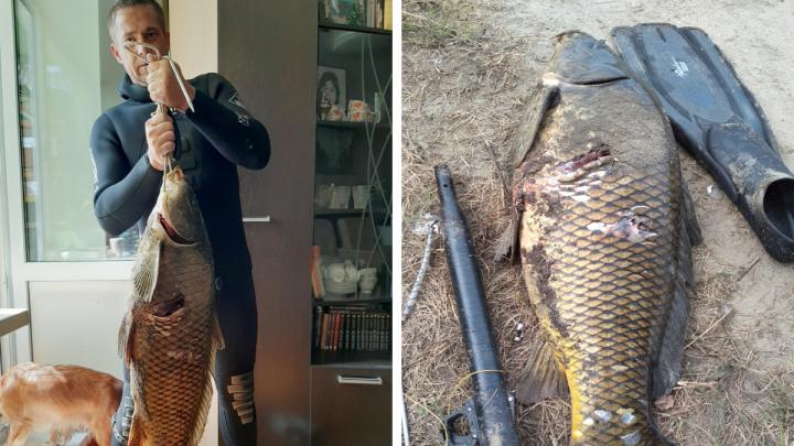 Тюменец поймал в водоеме на Лесобазе 15-килограммовую рыбу