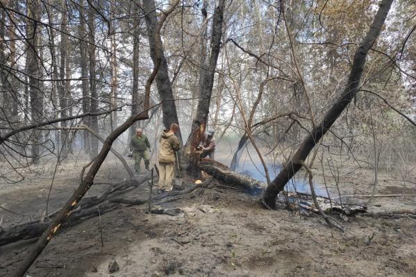 Сгорело 2 квадратных километра леса