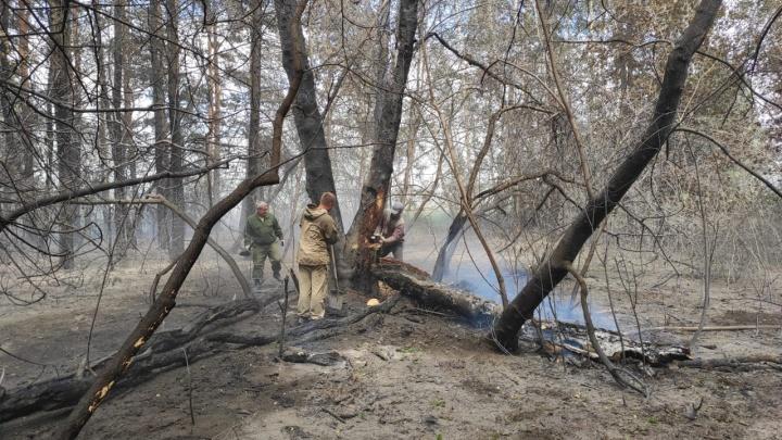 «Переобулись и побежали вместе с лопатами»: под Новосибирском выгорел лес — как его спасали местные
