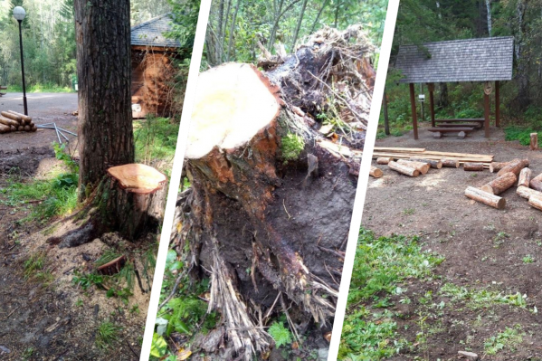 Под строительство площадки с тренажерами вырубили деревья