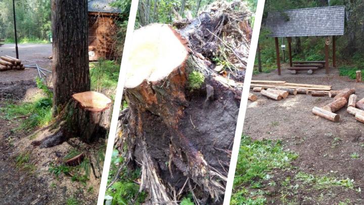 «Настоящий лесоповал»: общественник раскритиковал благоустройство на «Столбах»