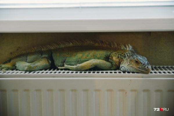 Некоторые тюменцы боятся замерзнуть и поэтому просят не отключать отопление до конца мая