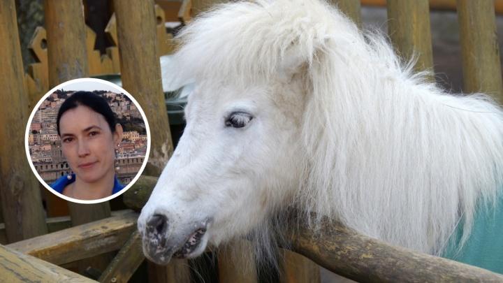 «Это моя детская мечта»: нижегородка взяла под опеку карликовую лошадь из «Лимпопо» на время эпидемии
