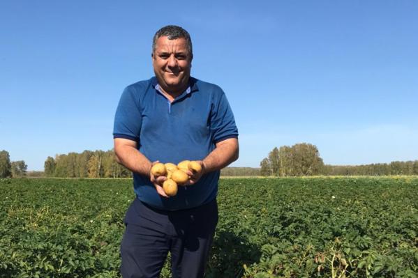 В хозяйстве «Дары Ордынска» в этом году вырастили первый чипсовый картофель дляLay's